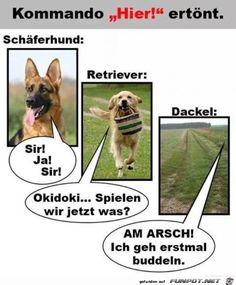 funny picture & Little Differences.jpg& by Friedi. On-lustiges Bild 'Die kleinen Unterschiede. Eine von 14329 Dateien … funny picture & Little Differences.jpg& by Friedi. One of 14329 files in the category & pictures& on FUNPOT. Funny Dog Memes, Funny Cats And Dogs, Funny Animal Videos, Videos Funny, Cute Dogs, Funny Shit, Funny Puppies, Tierischer Humor, Man Humor