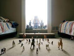 "Angela Strassheim's ""Untitled (Horses)"""