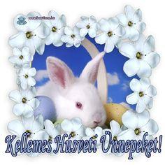 Teddy Bear, Easter, Animals, Magic, Creative, Animales, Animaux, Teddybear, Animal