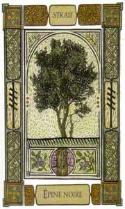 """Celtic Oracle Card """"Blackthorn"""" Ogham: Straif. One Way; meaning You do not possess the power of decision (in terms of the  question you have inquired the deck about) Destiny is the sole influencing factor so leave the decision and outcome to destiny, trust it, you will succeed in the end."""