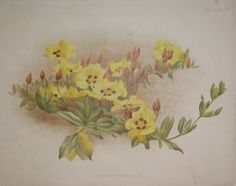 yellow flowers  no. - 19