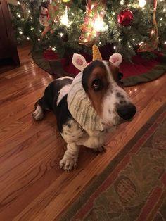 Christmas Basset Hound