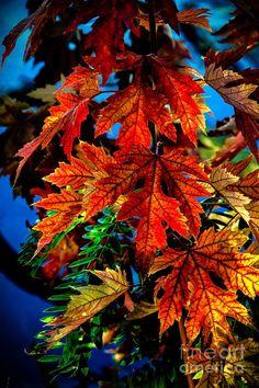 ed082e00a66 94 Best Autumn Holidays images