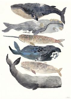 watercolor whales.