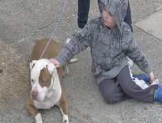 A group of teenagers came to the rescue of a dog thrown from a car in Upper Darby, Pennsylvania.