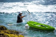 This guy tipped his kayak while getting out of it and spilt his catch back into the ocean. He then had to wade around collecting them all back.