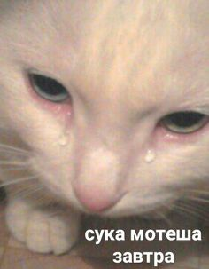 Stupid Pictures, Funny Cat Pictures, Stupid Cat, Stupid Memes, Hello Memes, Russian Memes, Cute Love Memes, Christian Memes, Cute Posts