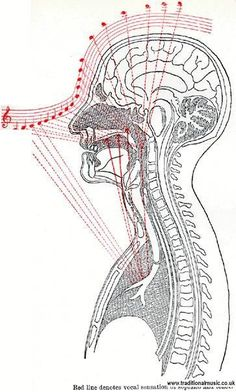 Resonance from chest voice to head voice for a soprano.