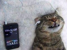 His favorite artist is Cat Stevens - that feline can rock!