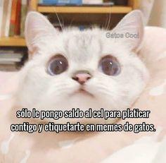 """22 Me gusta, 0 comentarios - Gatos Cool (@gatoscooloficial) en Instagram: """". .. . . . #memesdegatoscool #gatoscool😸 #gatos_cool #gato #gatos"""""""