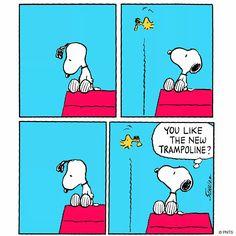 Trampoline Tuesdays                                                       …