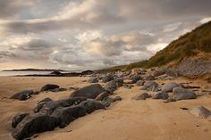 Traigh Mhor, Isle of Harris, Scotland.
