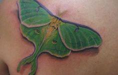 luna moth tattoo meaning Luna Moth Symbolism, Moth Tattoo Meaning, Luna Moth Tattoo, Tattoo Ideas, Tattoo Designs, Tattoo Sketches, Rat, Cool Tattoos, Tatting