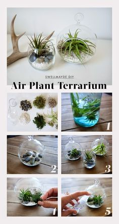 53 DIY Terrarium Ideas That Will Blow Your Mind Away! Make inexpensive homemade terrariums for your home and garden with these 53 DIY Terrarium Ideas available with tutorials! Mini Terrarium, Air Plant Terrarium, Succulent Terrarium Diy, Crystal Terrarium Diy, Indoor Garden, Indoor Plants, Outdoor Gardens, Balcony Garden, Hanging Air Plants
