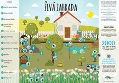 Living and natural garden Ekocentrum Huslík – Nature Beauties Natural Garden, Nature Tree, Dream Garden, Children, Kids, Flora, Trees, Gardening, Outdoor