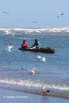 Seabirds in Bocas del Toro, Panama on Tranquilo Bay Eco Adventure Lodge excursion to Soropta Canal.