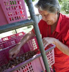 Mary Stewart, a snail rancher, knows what makes a tender snail. And she's also learned a lot about their sex lives.