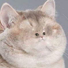 Heavy breathing on Pinterest | Heavy Breathing Cat, Ruby ...  Heavy Breathing Cat Picture