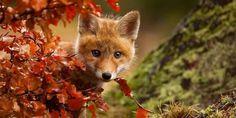 15 immagini di animali che ci faranno innamorare dell'autunno
