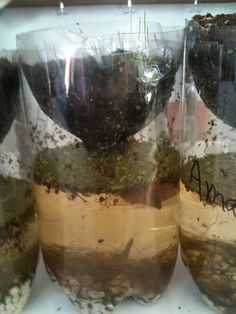 pond bottle habitats