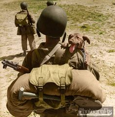 10 Photos Of War Dogs - Dogtime War Dogs, Military Dogs, Iwo Jima, Vintage Dog, Service Dogs, Working Dogs, World History, History Online, Military History