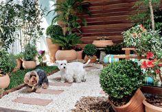 Mesmo morando em apartamento, os cães Billy e Burtikus podem brincar na grama – e também usá-la para fazer as necessidades. Na varanda, a paisagista Ivani Kubo idealizou uma contenção de cruzetas e, dentro dela, colocou uma camada de argila, outra de manta geotêxtil, depois terra e grama-são-carlos. Casa e Jardim. Jardim lindo, cachorros lindos, tudo lindo.