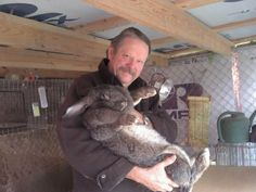 Flemish Giant Rabbits is a Female For Sale in Livingston TX Flemish Giant Rabbit, Pets For Sale, Funny Bunnies, Find Pets, Horse Head, Hare, Rabbits, Pet Supplies