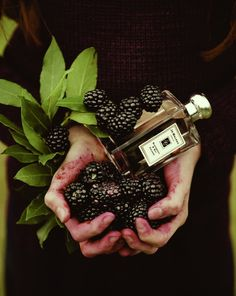 Blackberry & Bay by Jo Malone is a Floral Fruity fragrance that features grapefruit, floral notes, vetiver, cedar, blackberry and bay leaf.  http://www.fragrantica.com/perfume/Jo-Malone/Blackberry-Bay-15134.html