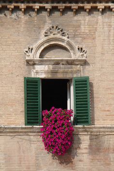 Petunias spilling out of a window. Love the green shutters! Window Box Flowers, Window Boxes, Window Sill, Flower Boxes, Balcony Window, Garden Windows, Window Dressings, Petunias, Windows And Doors
