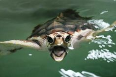 Volunteer with us on a sea turtle project in Latin America. For more info go to: http://www.seeturtles.org/663/volunteer.html (Photo Credit: P. von Weller)