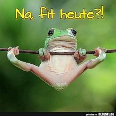 Dumpy Tree Frog Gymnastics 😜 Photo by Funny Frogs, Cute Frogs, Animals And Pets, Baby Animals, Wild Animals, Dumpy Tree Frog, Animal Pictures, Funny Pictures, Gymnastics Photos