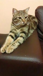 La custode dei segreti: Vivere con un gatto