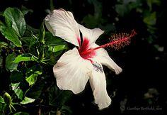 Greek Flower....
