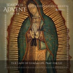 Season of Advent Day Our Lady of Guadalupe, pray for us Advent Prayers, Catholic Pictures, Advent Season, Pink Candles, Mary And Jesus, Pray For Us, Blessed Virgin Mary, Bible Stories, Mother Mary