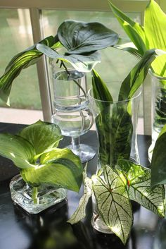 hosta leaves and other greenery in glass vases.... for centerpieces. Also in small mason jars.