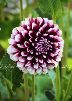 Purple and White Flower Enhanced by LedByLight on Etsy,