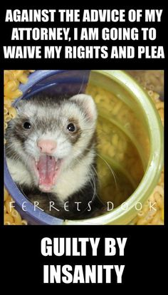 Baby Animals, Funny Animals, Cute Animals, Pet Shark, Funny Ferrets, Pet Ferret, Cutest Thing Ever, Funny Minion, Picture Captions