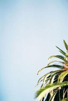 coconut palm trees & blue skies