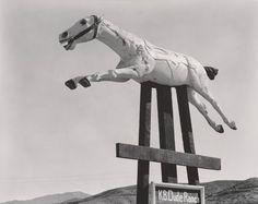 Edward Weston, Horse, KB Dude Ranch, 1938, © 1981 Center for Creative Photography, Arizona Board of Regents