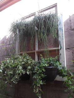 Jardim vertical  com janela de demolicao