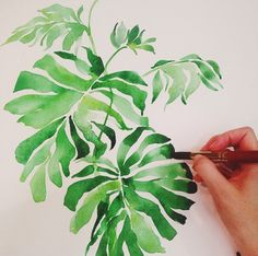 Mon Voir Calligraphy Watercolor Philodendron / Oh So Beautiful Paper Watercolor Plants, Watercolor Leaves, Watercolor Artists, Watercolor Techniques, Watercolor Illustration, Watercolour Painting, Painting & Drawing, Calligraphy Watercolor, Watercolors