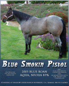 Blue Roan Quarter Horse Stallion