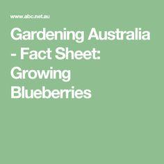 Gardening Australia - Fact Sheet: Growing Blueberries