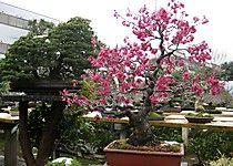 FuyoEn in Omiya Bonsai village
