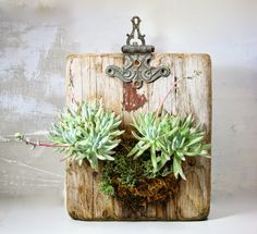 Awesome way to grow succulents! the slug and the squirrel