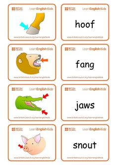 Animal Body Parts / Classification Of Animals - Lessons - Tes Teach Free Printable Handwriting Worksheets, Grade R Worksheets, Color Worksheets For Preschool, Animal Worksheets, Kindergarten Science, Kindergarten Classroom, Animal Body Parts, Teaching English Grammar, English Lessons For Kids
