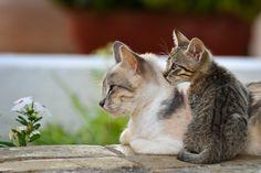 Cat and Kitten   Flickr - Photo Sharing!
