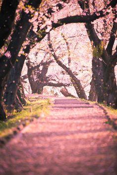Pink paradise Lijkt me leuk omdaar te lopen