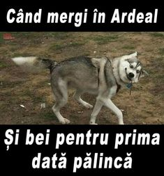 A fost bună, macar? Stupid Funny Memes, Funny Pins, Funny Texts, Curious Facts, Picts, Grumpy Cat, Really Funny, Funny Comics, Cringe