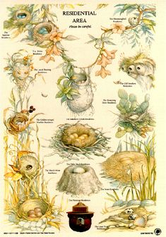 Types of Nests - Smoky Bear poster from the U. Forestry Service Bird activity, Apologia Flying Creatures {pic only! Bird Identification, Smokey The Bears, Nature Journal, Backyard Birds, Fauna, Wild Birds, Bird Watching, Botanical Illustration, Bird Art